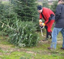 Weihnachtsbaum selber schlagen 2019 mainz