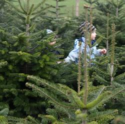 Weihnachtsbaum Selber Schlagen Berlin Brandenburg.Christbaum Selber Schlagen Agrar Aktuell De